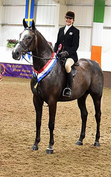 British Show Horse Association Bsha Hunter Championship Show